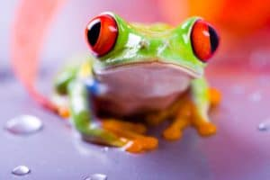 #3 fun facts about the Red-Eyed tree frog