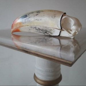 tucan bird skull