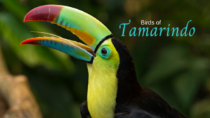 Tamarindo birds
