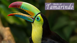 Birds of Tamarindo