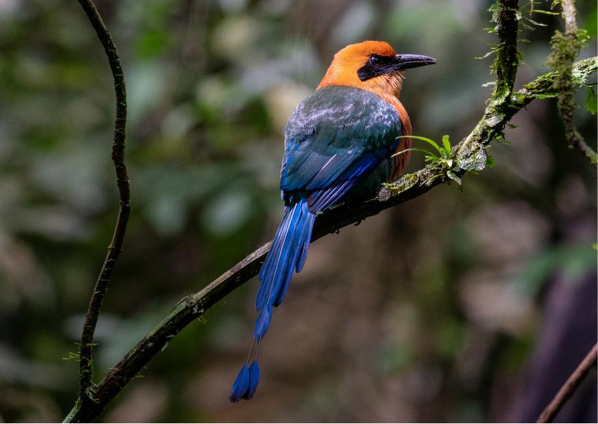 Birds of Guanacaste