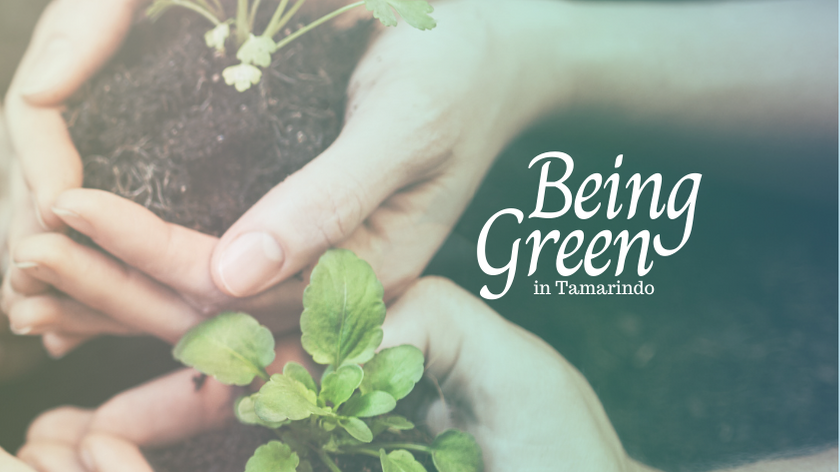 How to Be Green in Tamarindo
